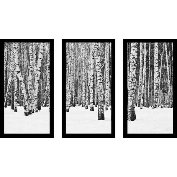 Birch Trees in Winter 3 Piece Framed Photographic Print Set by Picture Perfect International