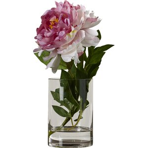 Pink Single Stem Peony in Water Flower Arrangement