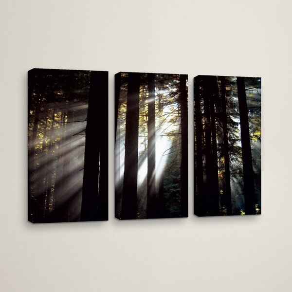 Sunlight Through The Woods 3 Piece Photographic Print on Wrapped Canvas Set by Loon Peak