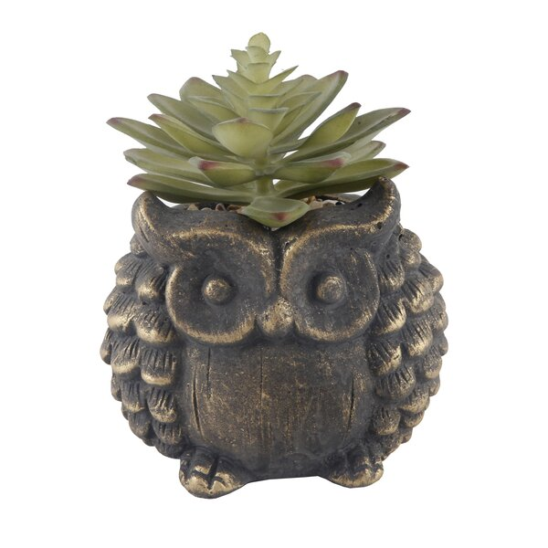 Succulent Plant in Pot Se by Millwood Pines
