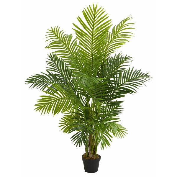 Hawaii Floor Palm Tree in Planter by Bay Isle Home