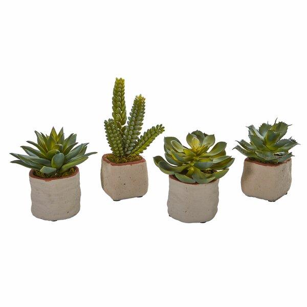 4 Piece Succulent Desktop Plant Set by Foundry Select