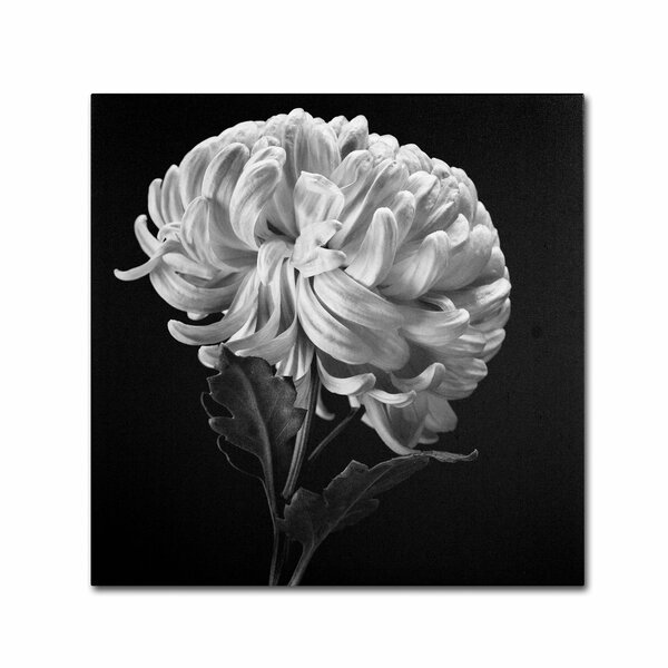Mum II by Michael Harrison Photographic Print on Wrapped Canvas by Trademark Fine Art