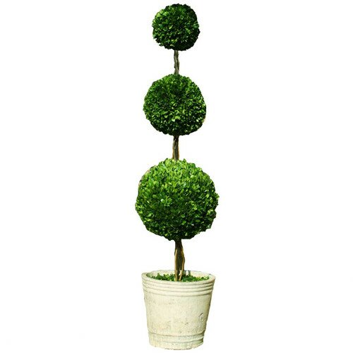 Triple Preserved Boxwood Topiary in Pot by The French Bee