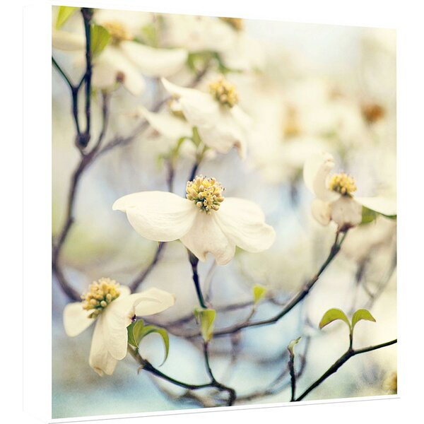 White Floral I Photographic Print by PTM Images