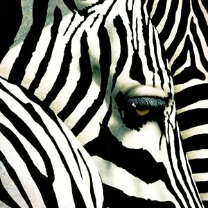 Do Zebras Dream In Color Painting Print on Wrapped Canvas by Portfolio Canvas Decor