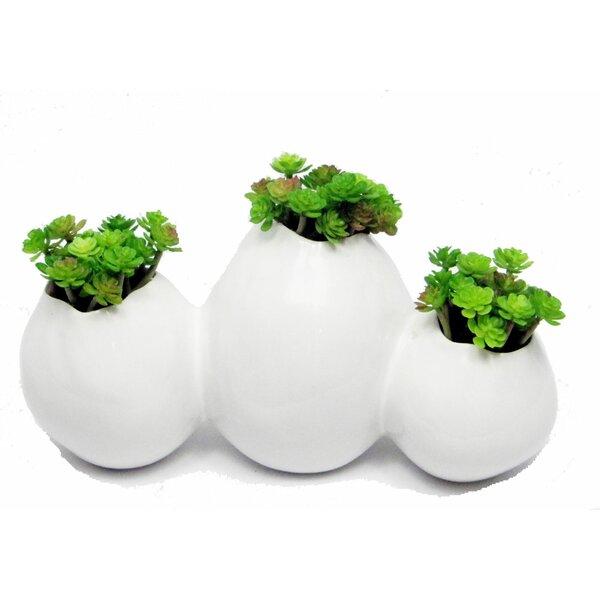 Sedum Desk Top Plant in Decorative Vase by Creative Branch