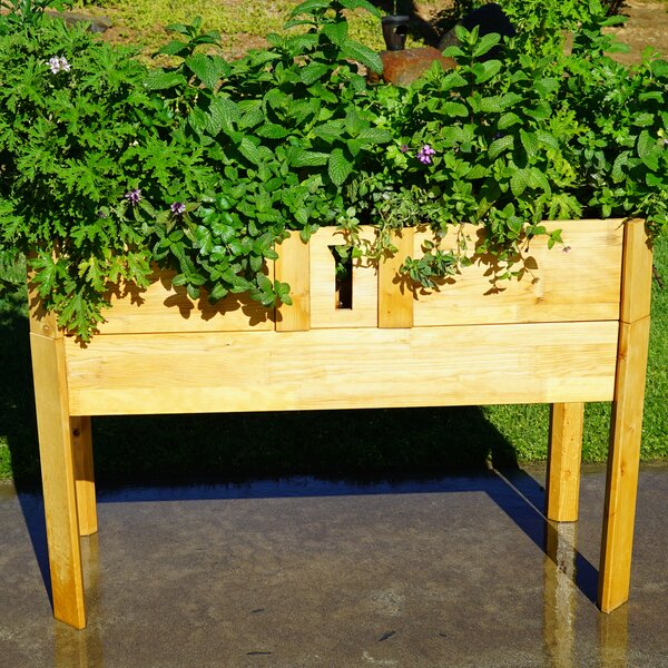 Hiltner Self Watering Planter Box by August Grove