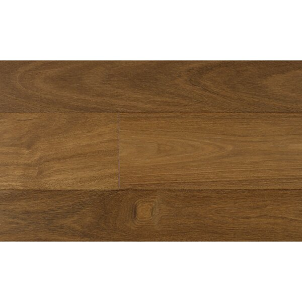 6-1/4 Engineered Chestnut Hardwood Flooring in Brown by IndusParquet