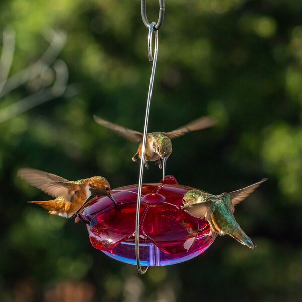 Ruby Sipper® Hanging Hummingbird Feeder by Droll