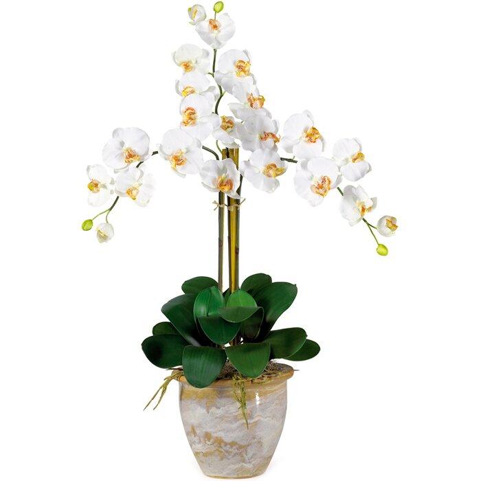 Nearly natural triple phalaenopsis silk orchid flowers in cream triple phalaenopsis silk orchid flowers in cream mightylinksfo