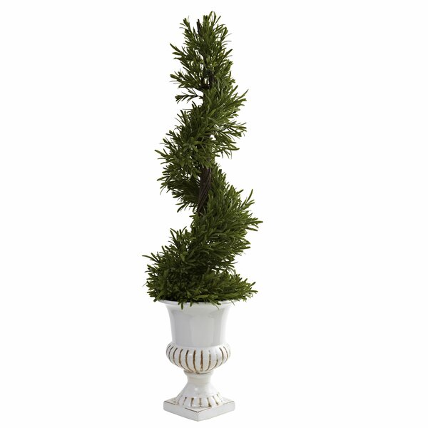 Rosemary Spiral Topiary in Urn by Ophelia & Co.