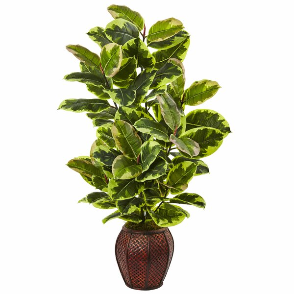 Rubber Foliage Plant in Planter by Nearly Natural