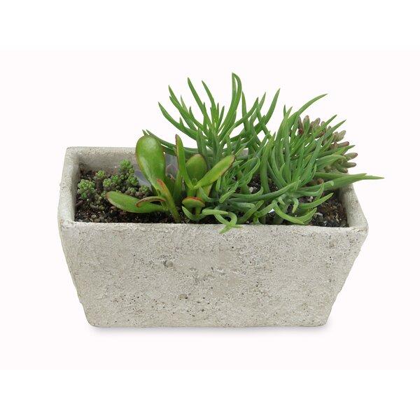 Remi Rectangular Concrete Pot Planter by Bloomsbury Market