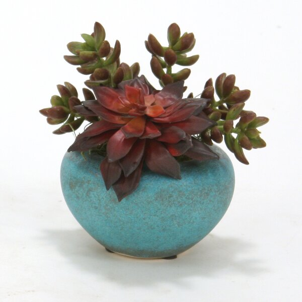 Mixed Succulents Desk Top Plant in Pot (Set of 3) by Distinctive Designs