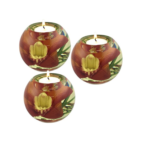 Cymbidium Orchid Glass Tealight (Set of 3) by Bloomsbury Market
