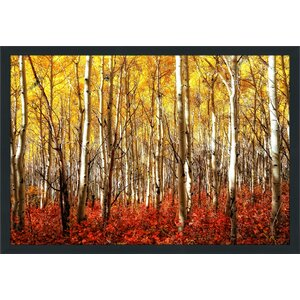 Birch Trees Framed Photographic Print by Picture Perfect International