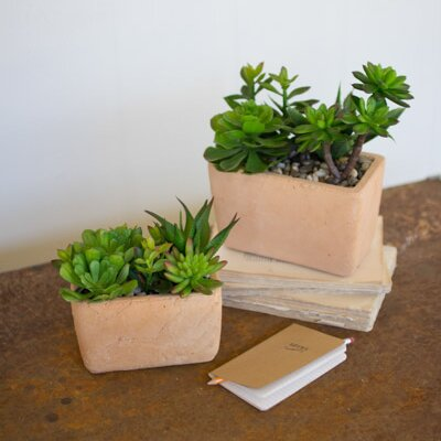 Faux Succulents in Terracotta Planters (Set of 2) by Birch Lane™