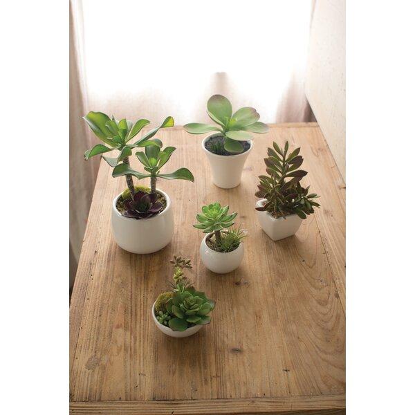 5 Piece Artificial Succulent Plant in Pot by Bungalow Rose
