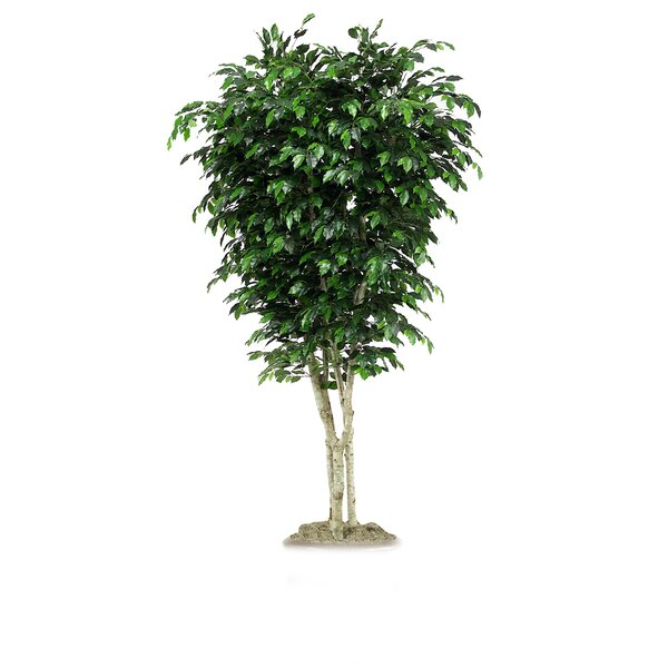 Topiary Ficus Tree in Planter by Distinctive Designs