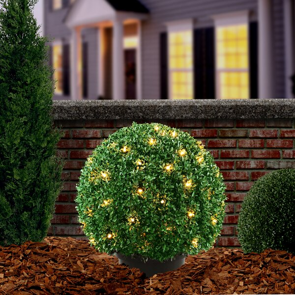 Pre-Lit Mini Boxwood Ball Topiary in Pot by National Tree Co.