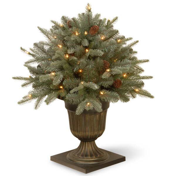 Feel Real® Frosted Arctic Spruce Porch Bush Foliage Topiary in Urn by Darby Home Co