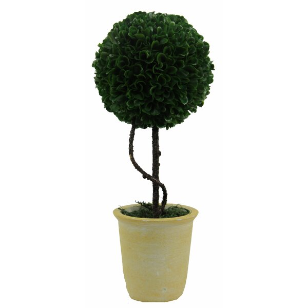 Faux Preserved Floor Boxwood Topiary In Pot by Ophelia & Co.