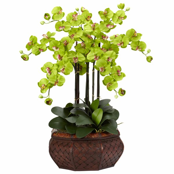 Large Phalaenopsis Silk Flower Arrangement in Green by Nearly Natural