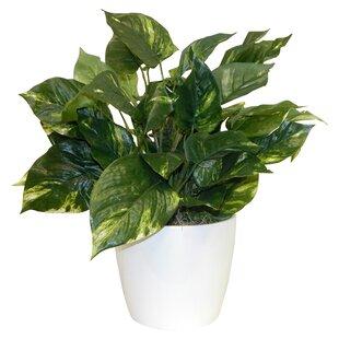 Modern & Contemporary Tall Indoor Plants | AllModern