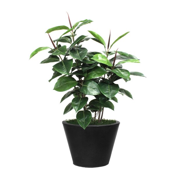 Artificial Rubber Foliage Plant in Planter by Brayden Studio