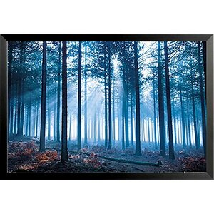 'Translucent Blue Forest' by Tom Mackie Framed Photographic Print by Buy Art For Less