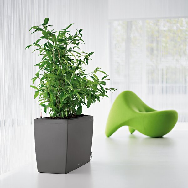 Cararo Self-Watering Plastic Planter box by Lechuza