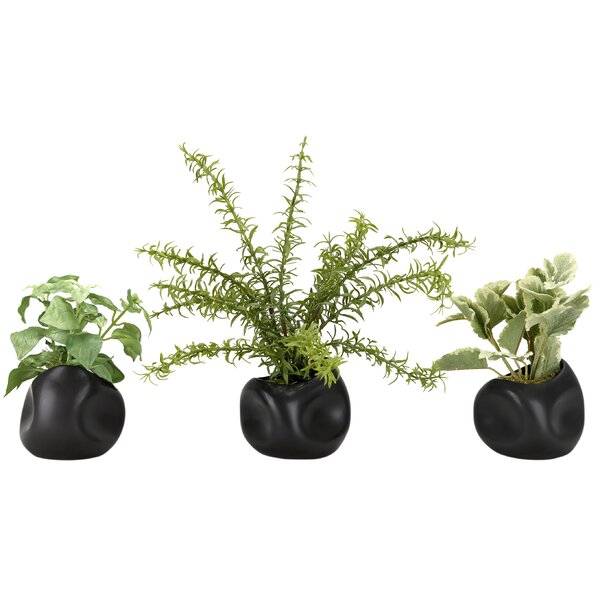 Springeri, Basil and Mint in Ceramic Floor Foliage Plant in Planter Set (Set of 3) by Wrought Studio