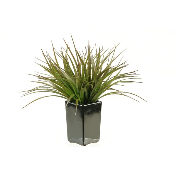 Square Ceramic Grass in Planter by D & W Silks