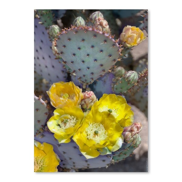 Prickly Pear Cactus Blossoms Photographic Print by East Urban Home
