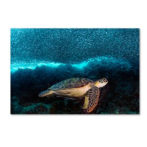 'Turtle and Sardines' Photographic Print on Wrapped Canvas by Trademark Fine Art