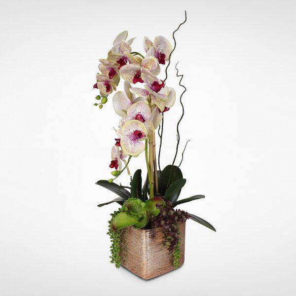 Silk Orchids and Succulents Floral Arrangement in Ceramic Pot by Darby Home Co
