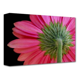 'Shy Flower' by Dan Holm Photographic Print on Wrapped Canvas by ArtWall