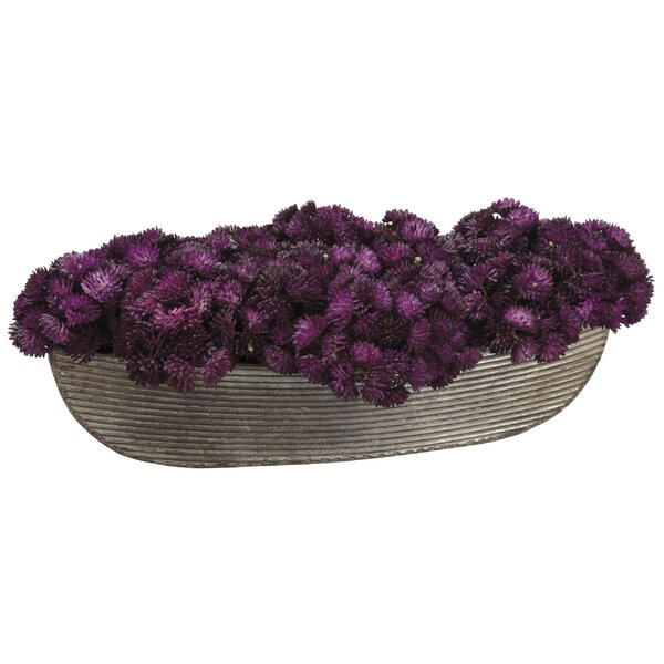 Sedums Plant in Pot by Williston Forge