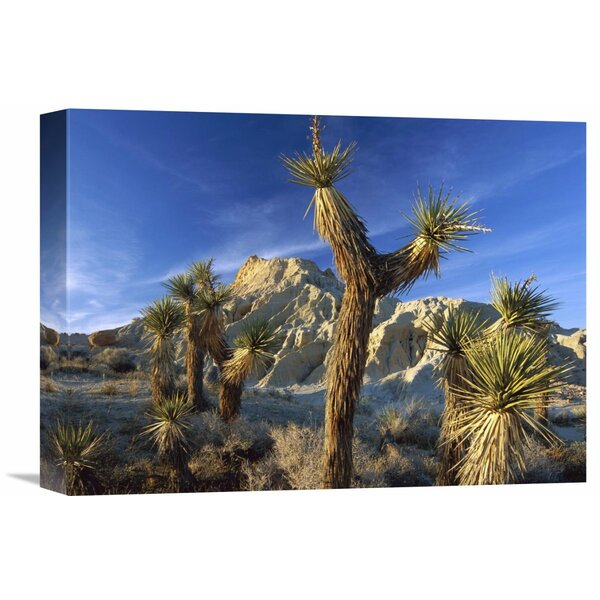 Nature Photographs Joshua Trees in Red Rock Canyon State Park, California by Tim Fitzharris Photographic Print on Wrapped Canvas by Global Gallery