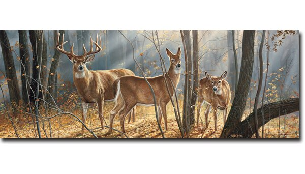 Woodland Splendor by Rosemary Millette Painting Print Plaque by WGI-GALLERY