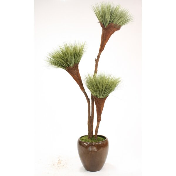 Basil Grass Pom Pom Tree in Pot by Distinctive Designs