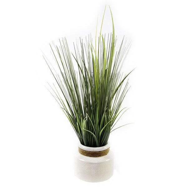 Desktop Onion Grass in Pot by Highland Dunes