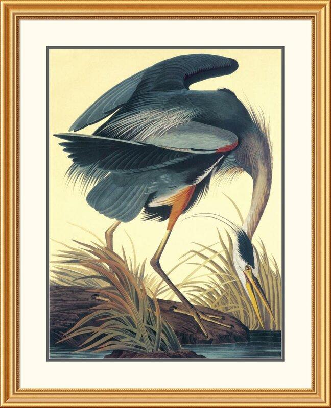 Great Blue Heron by John James Audubon Framed Painting Print