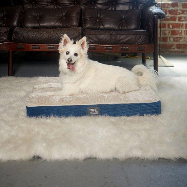 Cesar Millan Ortho Comfort Dog Mat by R2P Pet Ltd.