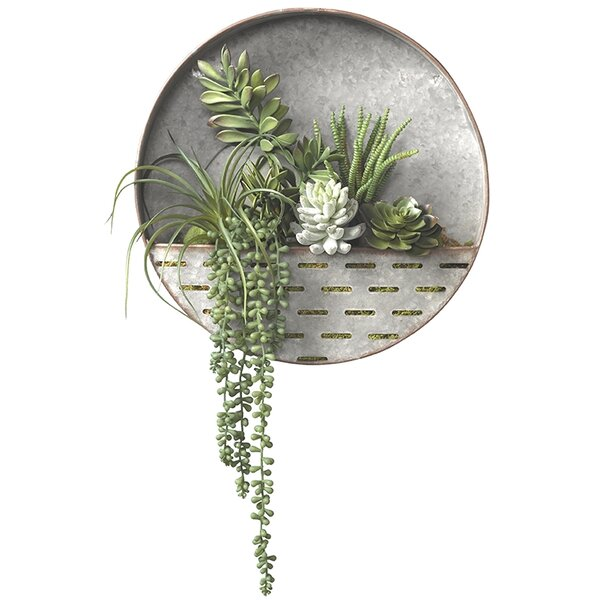 Assorted Succulent Hanging Plant by Bungalow Rose