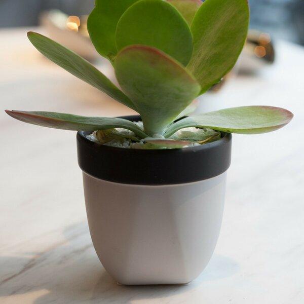 Round Pot Planter by 18Karat®
