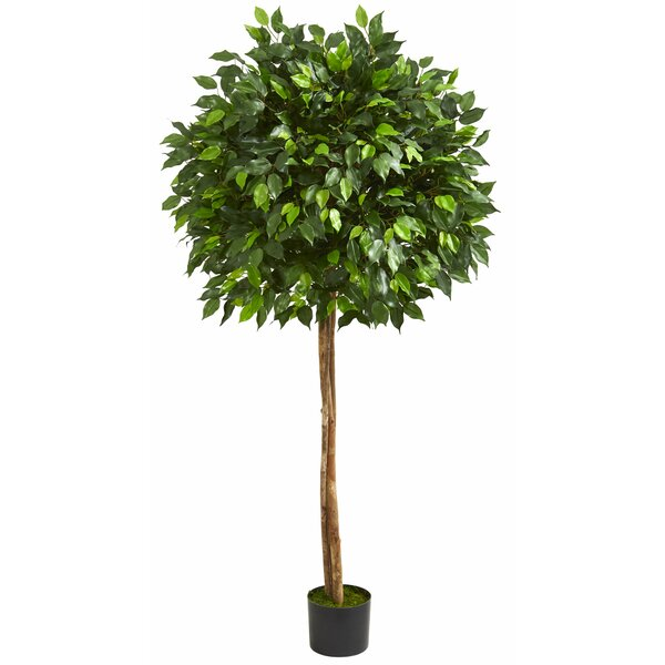 Floor Ficus Tree in Planter by Charlton Home