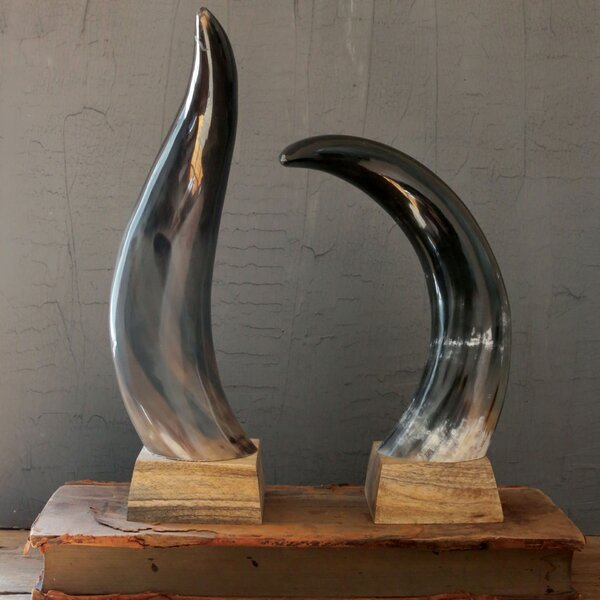 Navarra Decorative Horn by Bloomsbury Market