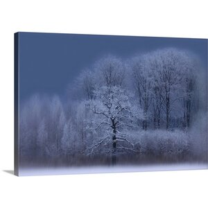 Winter by Allan Wallberg Photographic Print on Canvas by Canvas On Demand